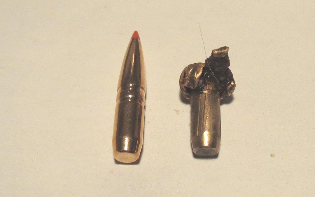 Balas blandas o balas duras: cuál es mejor para la caza Española?