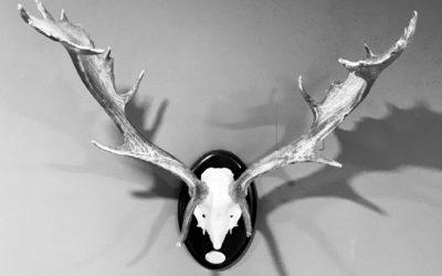 Aventuras y desventuras del «tio Rufo» – El gamo accidentado
