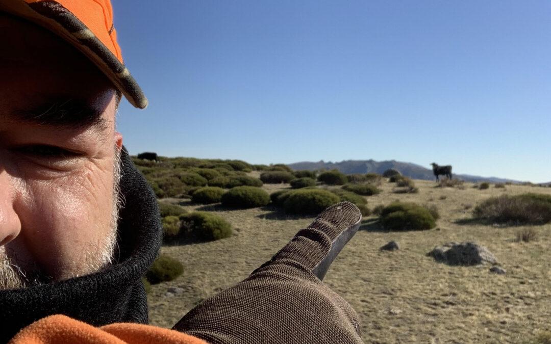 Toro en monteria